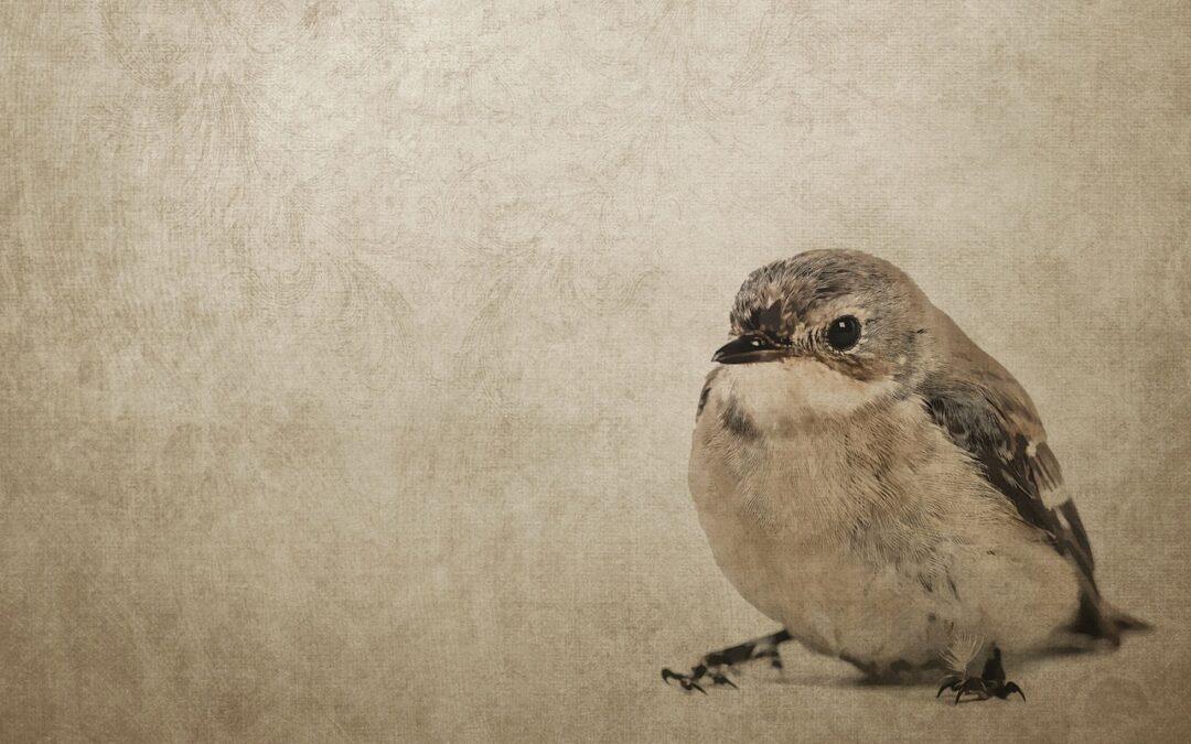 Teckna fåglar – digital kurs med Biotopia