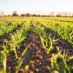 Framtidens hållbara jordbruk