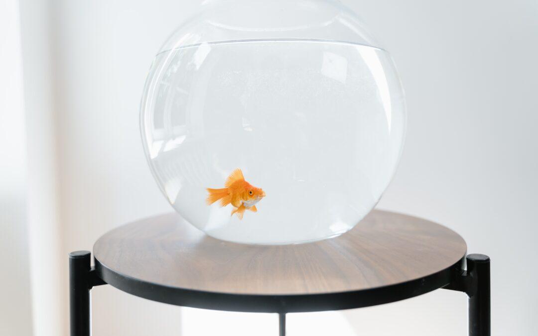 Lära sig mer om akvariefiskar