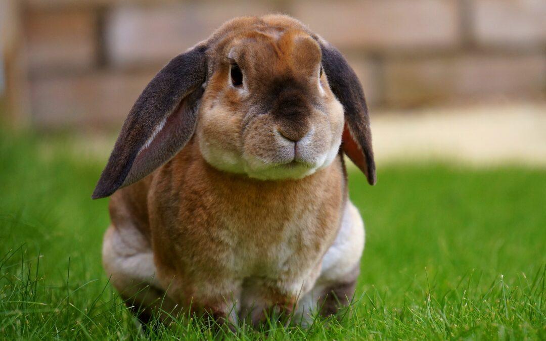 Lära sig mer om kaniner